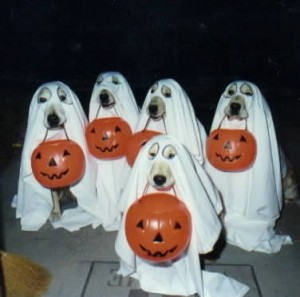 halloween-dogs-trick-or-treat