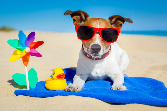 Pet Summertime Safety in Orlando FL